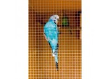 Cage & Aviary Welded Panel - 6x6mm 6x0.9m