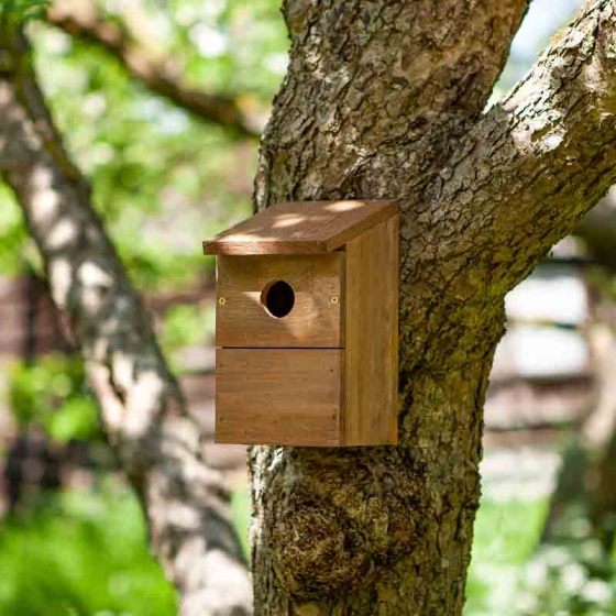 Classic Nest Box – Now Only £5.00