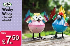 Wacky Wings  – Now Only £7.50